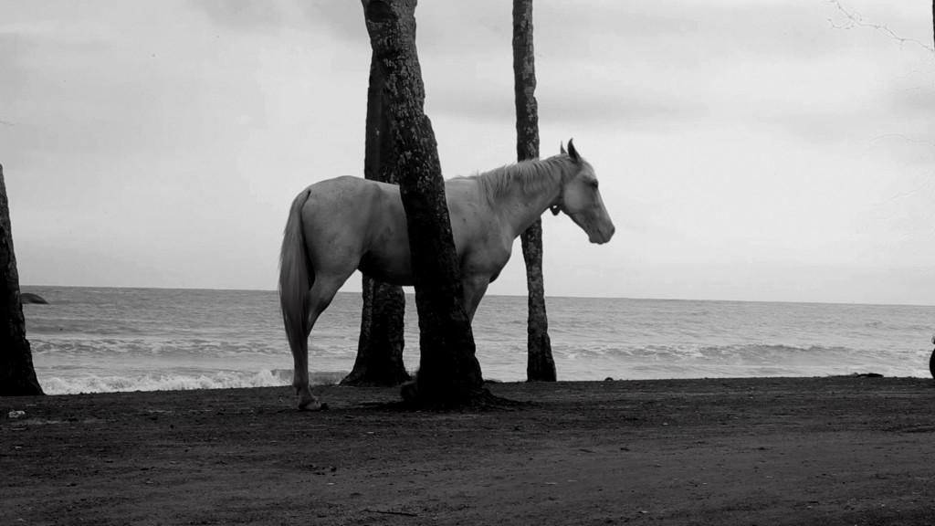 #horse alone